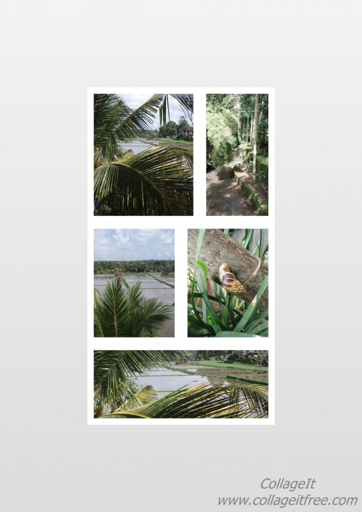 Bali collage test